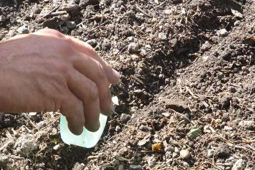 semence de carotte pres de barcelonnette