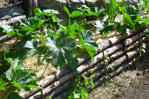 courgettes en vallle de l'ubaye