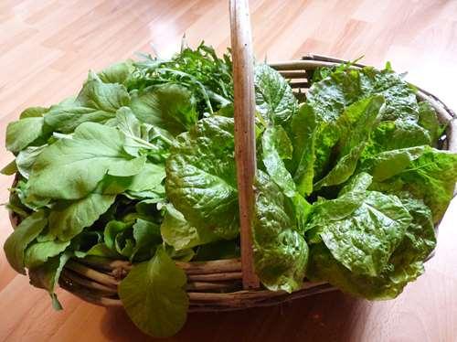 les salades de l'ubaye arrivent au gite de méolans pres de barcelonnette